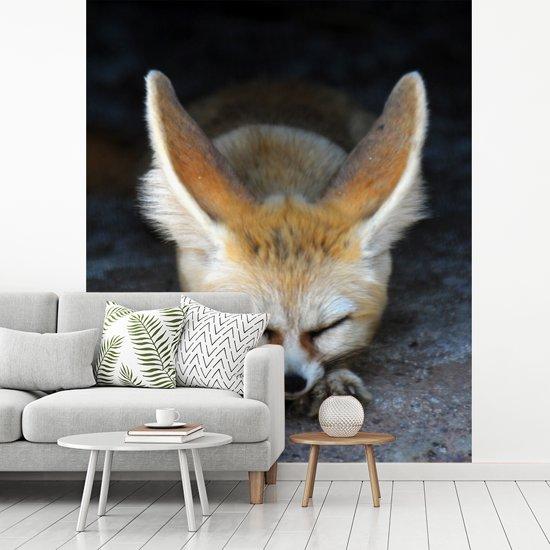 Fotobehang vinyl - Een slapende Fennek op de grond breedte 280 cm x hoogte 350 cm - Foto print op behang (in 7 formaten beschikbaar)