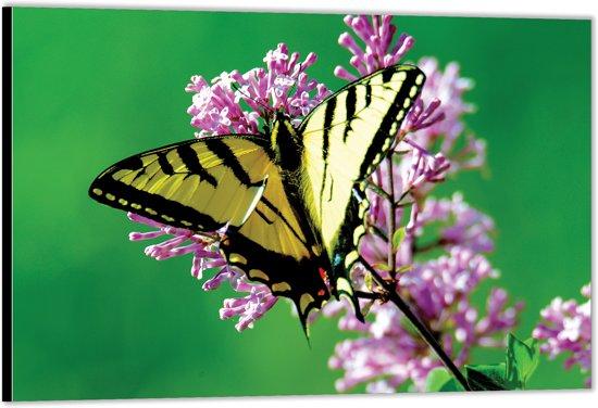 Dibond – Geel / Zwarte Vlinder– 90x60 Foto op Aluminium (Wanddecoratie van metaal)