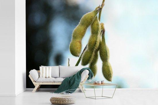 Fotobehang vinyl - Groene sojabonen tegen een vervaagde achtergrond breedte 330 cm x hoogte 220 cm - Foto print op behang (in 7 formaten beschikbaar)