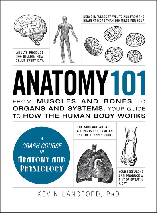 bol.com | Anatomy and Physiology For Dummies (ebook), Erin Odya ...