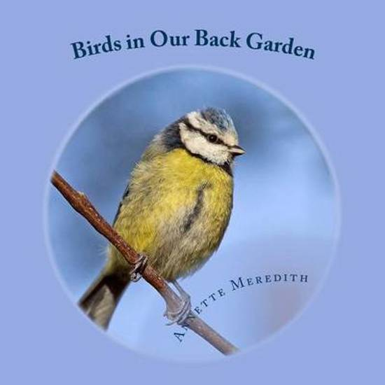 Birds in Our Back Garden