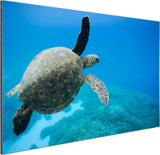 Groene zwemmende schildpad  Aluminium 90x60 cm - Foto print op Aluminium (metaal wanddecoratie)