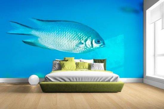Blauw-grijze vis Fotobehang 380x265