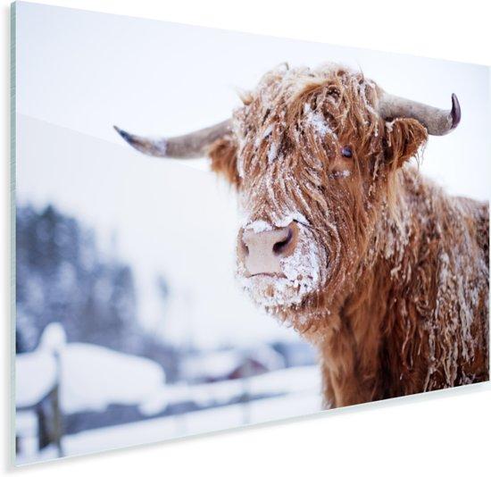 Een Schotse hooglander bedekt door de sneeuw Plexiglas 180x120 cm - Foto print op Glas (Plexiglas wanddecoratie) XXL / Groot formaat!