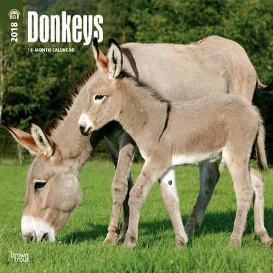 Bolcom Donkeys Ezel Kalender 2018