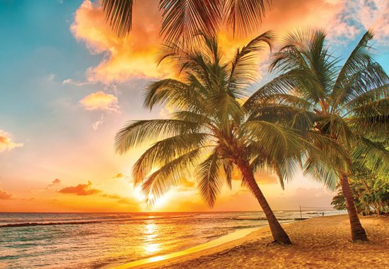 Fotobehang Palmtrees At The Beach | XXXL - 416cm x 254cm | 130g/m2 Vlies