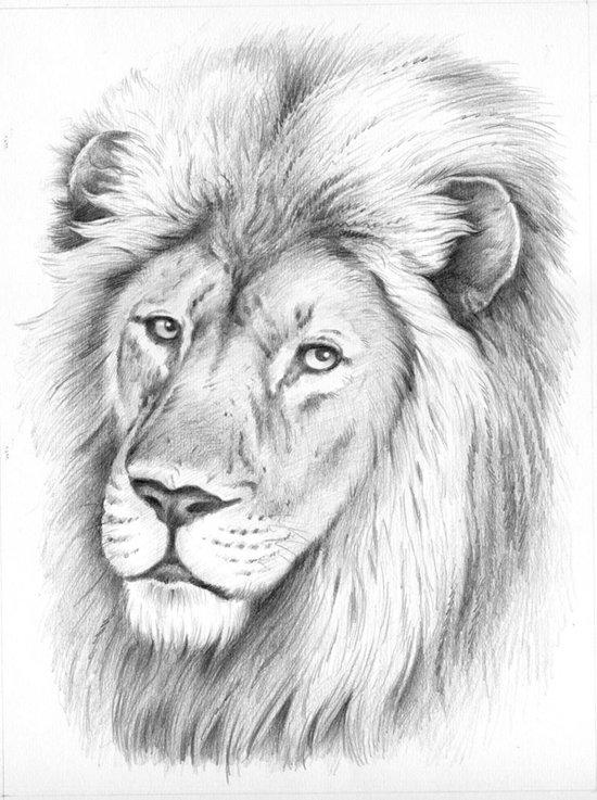 bol  schetsen op nummer  lion portrait reeves