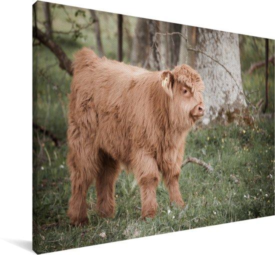 Schattige Schotse hooglander kalf in het bos Canvas 90x60 cm - Foto print op Canvas schilderij (Wanddecoratie woonkamer / slaapkamer) / Wilde dieren Canvas Schilderijen