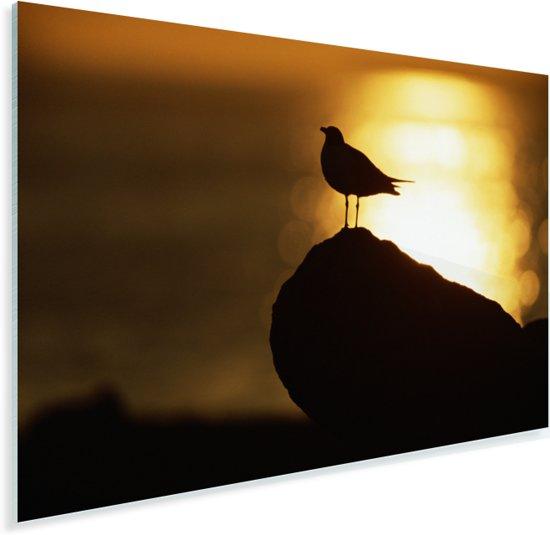 Lachmeeuw bij de zonsondergang Plexiglas 60x40 cm - Foto print op Glas (Plexiglas wanddecoratie)