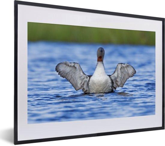 Foto in lijst - Roodkeelduiker steekt uit boven het water fotolijst zwart met witte passe-partout klein 40x30 cm - Poster in lijst (Wanddecoratie woonkamer / slaapkamer)