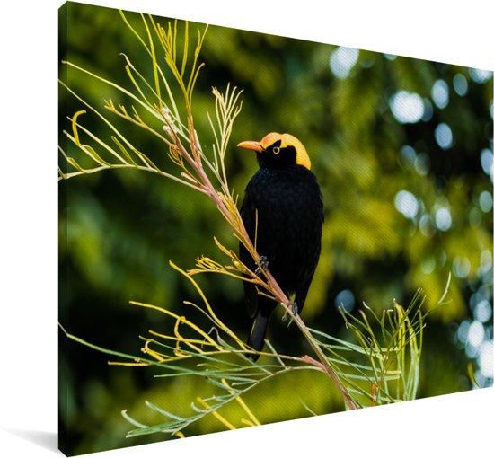 Mannelijke prieelvogel in een boom Canvas 140x90 cm - Foto print op Canvas schilderij (Wanddecoratie woonkamer / slaapkamer)