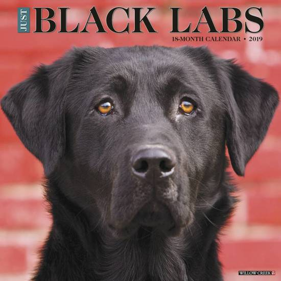Black Labs 2019 Kalender