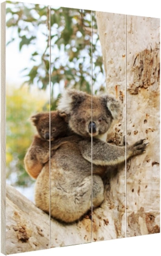 Koala met welp op een eucalyptusboom Hout 60x80 cm - Foto print op Hout (Wanddecoratie)