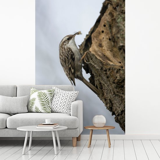 Fotobehang vinyl - Boomkruiper in de natuur breedte 270 cm x hoogte 400 cm - Foto print op behang (in 7 formaten beschikbaar)
