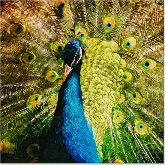 Canvas schilderij pauw vogel 100x100 cm for Schilderij buiten intratuin