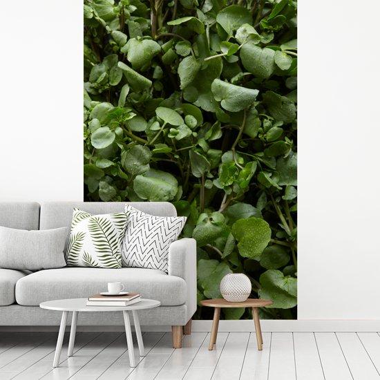 Fotobehang vinyl - Close up van waterdruppels op witte waterkers breedte 200 cm x hoogte 300 cm - Foto print op behang (in 7 formaten beschikbaar)
