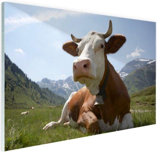 Liggende koe met bel Glas 30x20 cm - Foto print op Glas (Plexiglas wanddecoratie)
