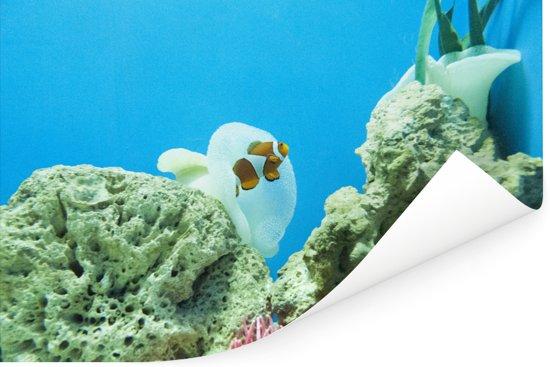 Clown vis zwemmend achter een koraal tegen een blauwe achtergrond Poster 180x120 cm - Foto print op Poster (wanddecoratie woonkamer / slaapkamer) XXL / Groot formaat!