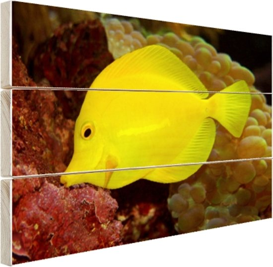 Gele Tang Hout 80x60 cm - Foto print op Hout (Wanddecoratie)