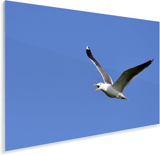 Prachtige foto van een zilvermeeuw die aan het vliegen Plexiglas 60x40 cm - Foto print op Glas (Plexiglas wanddecoratie)