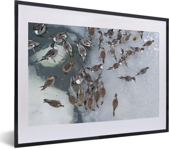 Foto in lijst - Luchtfoto van een groep pijlstaarten op het ijs in Japan fotolijst zwart met witte passe-partout klein 40x30 cm - Poster in lijst (Wanddecoratie woonkamer / slaapkamer)
