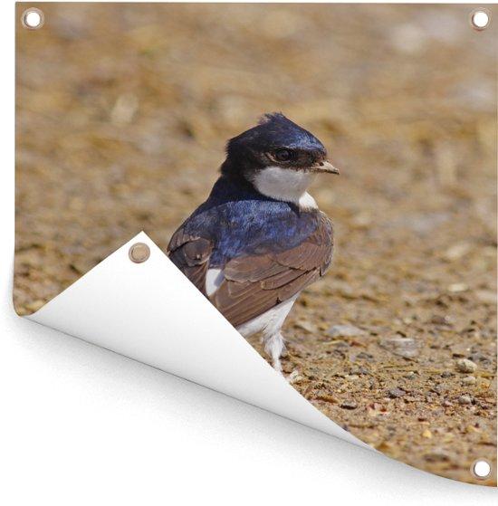 Een kleurrijke huiszwaluw kijkt opzij Tuinposter 50x50 cm - klein - Tuindoek / Buitencanvas / Schilderijen voor buiten (tuin decoratie)