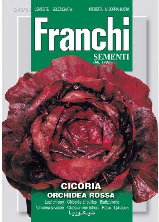 Cicoria Orchidea Rossa - Roodlof  - set van 6 stuks