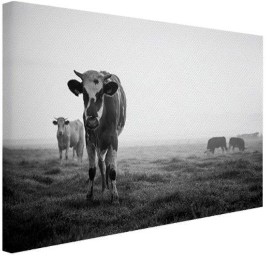 bolcom zwartwit koeien wanddecoratie foto print op