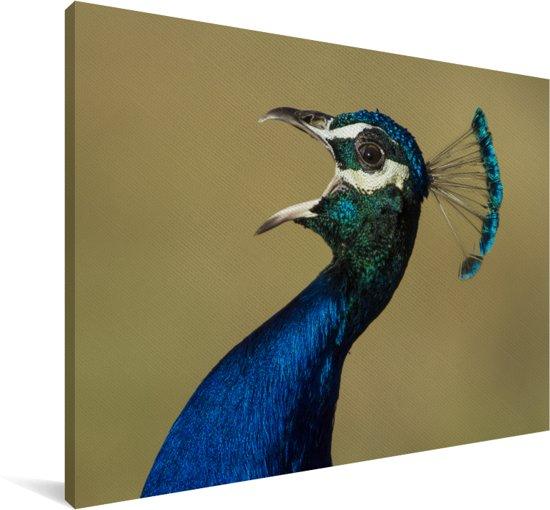 Groene pauw maakt geluid met open bek Canvas 90x60 cm - Foto print op Canvas schilderij (Wanddecoratie woonkamer / slaapkamer)