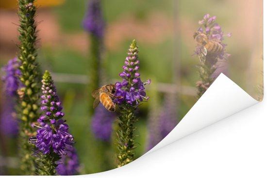 Drukke honingbijen verzamelen nectar van de bloemen van een lange ereprijs Poster 30x20 cm - klein - Foto print op Poster (wanddecoratie woonkamer / slaapkamer)