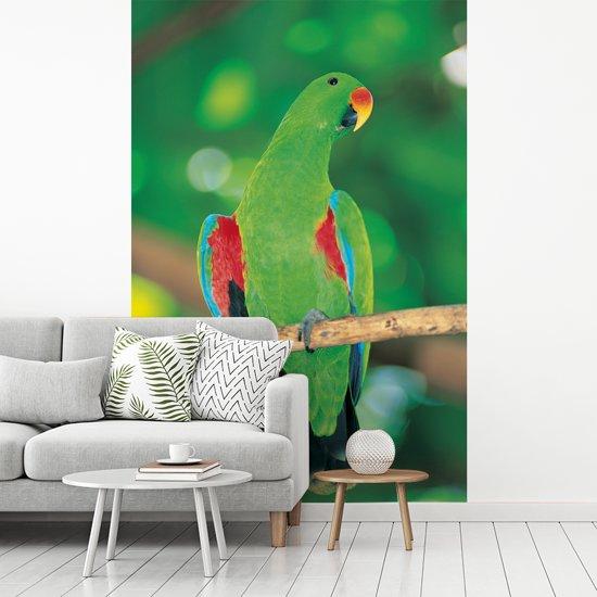 Fotobehang vinyl - Welgevormde edelpapegaai kijkt opzij met een licht onscherpe achtergrond breedte 155 cm x hoogte 240 cm - Foto print op behang (in 7 formaten beschikbaar)