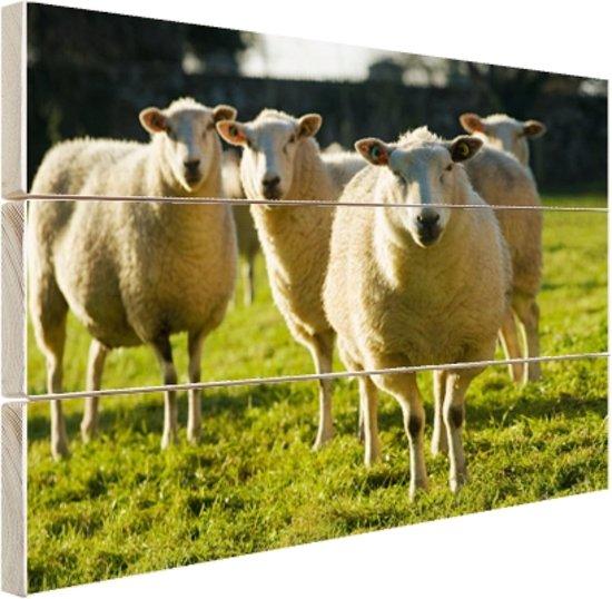 Schaapskudde in weiland Hout 30x20 cm - klein - Foto print op Hout (Wanddecoratie)