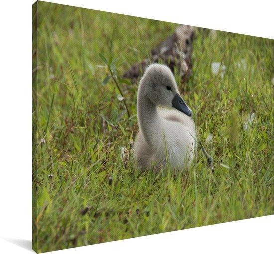 Schattige baby trompetzwaan in het gras Canvas 90x60 cm - Foto print op Canvas schilderij (Wanddecoratie woonkamer / slaapkamer)