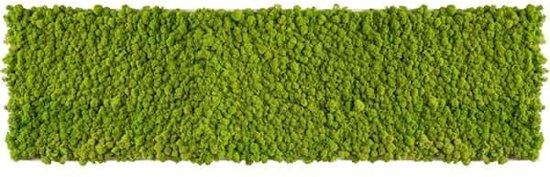 reindeer moss picture 140 x 40 CM voorjaar