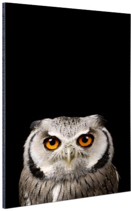Portret uil Aluminium 40x60 cm - Foto print op Aluminium (metaal wanddecoratie)