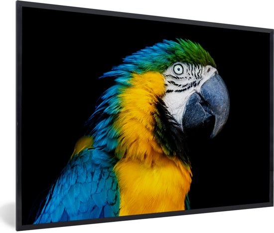 Foto in lijst - Een kleurrijke blauwkeelara kijkt opzij fotolijst zwart 60x40 cm - Poster in lijst (Wanddecoratie woonkamer / slaapkamer)