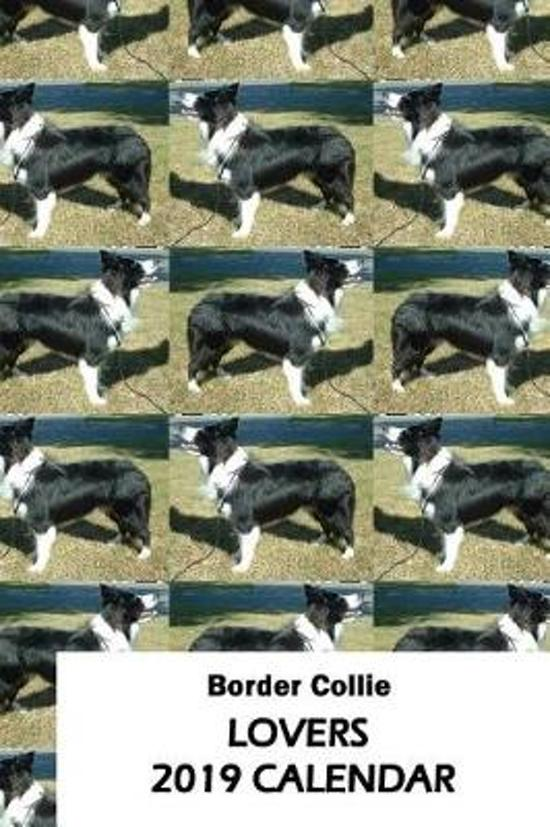 Border Collie Lovers 2019 Calendar