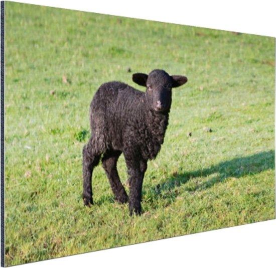 FotoCadeau.nl - Zwart lam in de wei Aluminium 90x60 cm - Foto print op Aluminium (metaal wanddecoratie)