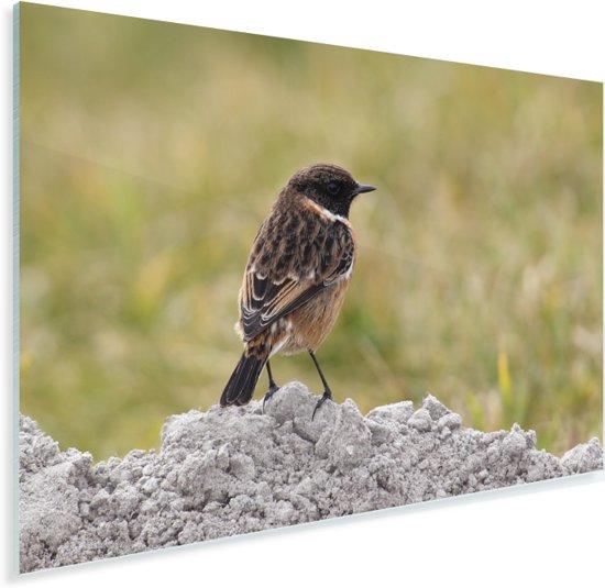 Een roodborsttapuit op een hoopje stenen Plexiglas 60x40 cm - Foto print op Glas (Plexiglas wanddecoratie)