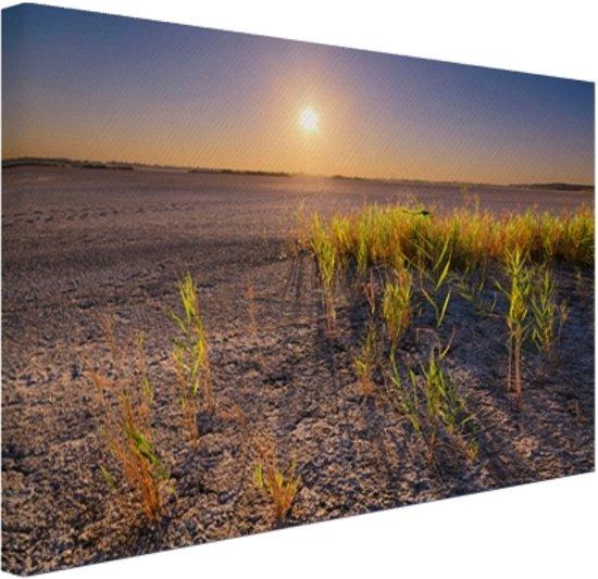 FotoCadeau.nl - Droge woestijn met plantjes  Canvas 80x60 cm - Foto print op Canvas schilderij (Wanddecoratie)