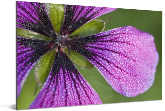Paarse geranium blaadjes Aluminium 30x20 cm - klein - Foto print op Aluminium (metaal wanddecoratie)