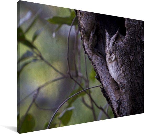 Indische dwergooruil in een boomgat Canvas 30x20 cm - klein - Foto print op Canvas schilderij (Wanddecoratie woonkamer / slaapkamer)