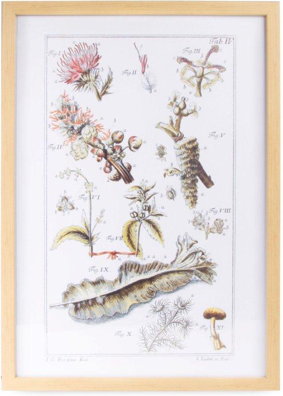 Art for the Home - Schilderij - Botanisch - Meerkleurig - 40x60 cm