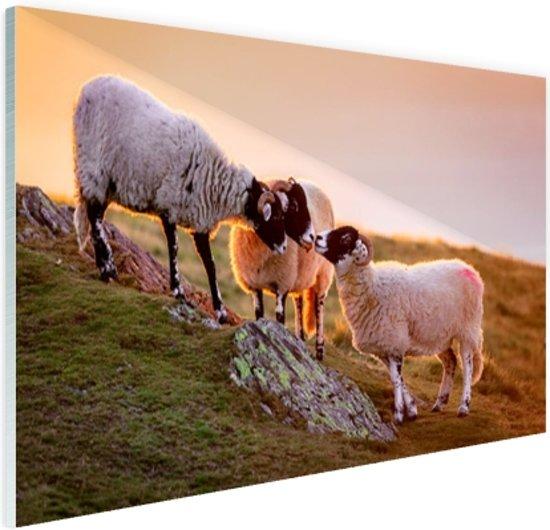 Drie schapen bij zonsopkomst Glas 90x60 cm - Foto print op Glas (Plexiglas wanddecoratie)