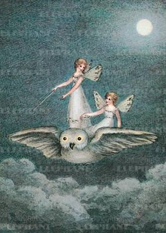 Afbeelding van het spel Fairies Riding Owl - Birthday Greeting Card