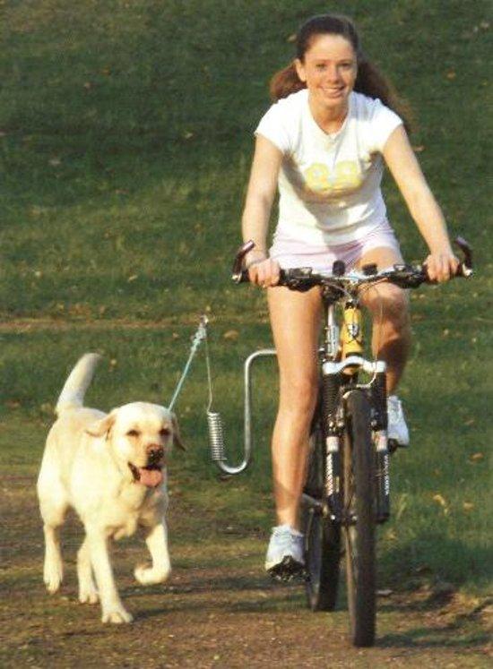 Springer. veilig fietsen met de hond