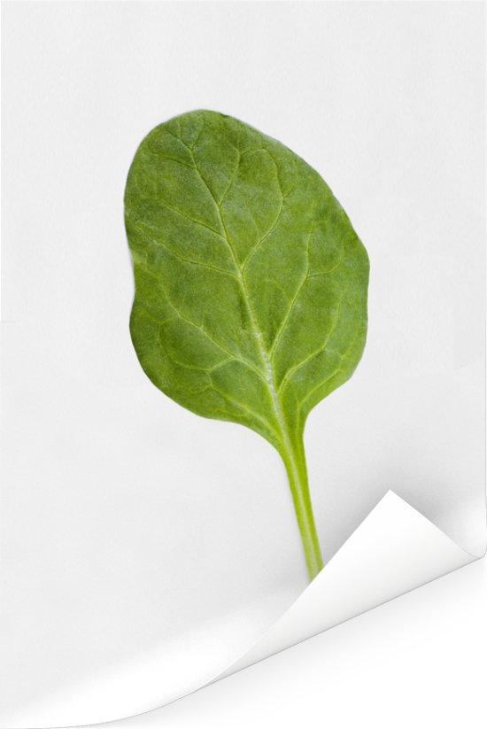 Een blad spinazie tegen een witte achtergrond Poster 40x60 cm - Foto print op Poster (wanddecoratie woonkamer / slaapkamer)