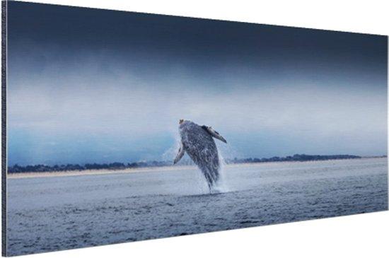 Brede foto van springende walvis Aluminium 90x60 cm - Foto print op Aluminium (metaal wanddecoratie)