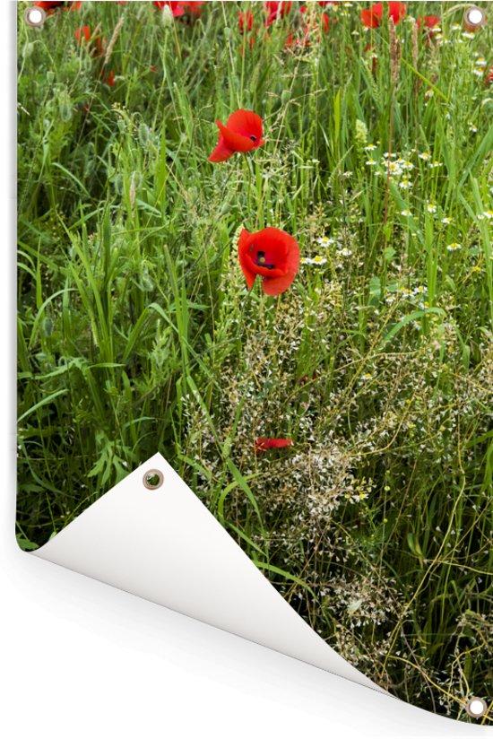 Veld met bloeiende slaapbollen tussen het groen Tuinposter 40x60 cm - klein - Tuindoek / Buitencanvas / Schilderijen voor buiten (tuin decoratie)