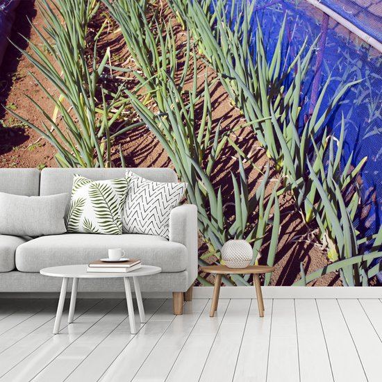 Fotobehang vinyl - Lange sint-jansuien groeiend in het veld breedte 360 cm x hoogte 270 cm - Foto print op behang (in 7 formaten beschikbaar)